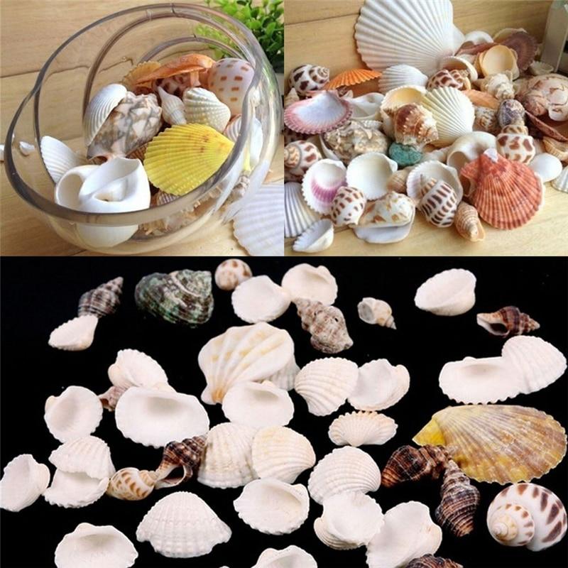 Фото - 100g Beach Fashion Seashells Sea Shells For Craft Decor Fashion DIY Jewelry Findings Jewelery Craft Accessories декор legend seashells 20 45 336763 73 44