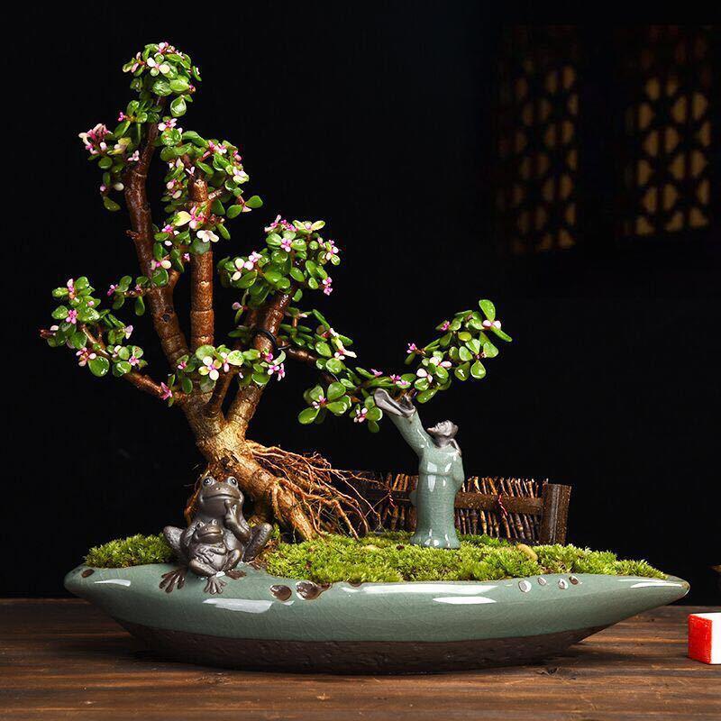 أصيص زهور بسيط إبداعي من السيراميك على الطراز الصيني فن بونساي للأماكن الداخلية أصيص زهور نبات أخضر بوعاء كبير من الهليون أصيص عصاري