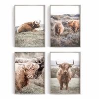 Ferme toile peinture Animal sauvage Highland vache affiche imprime mur Art photos pour salon decor affiches et impressions deco maison