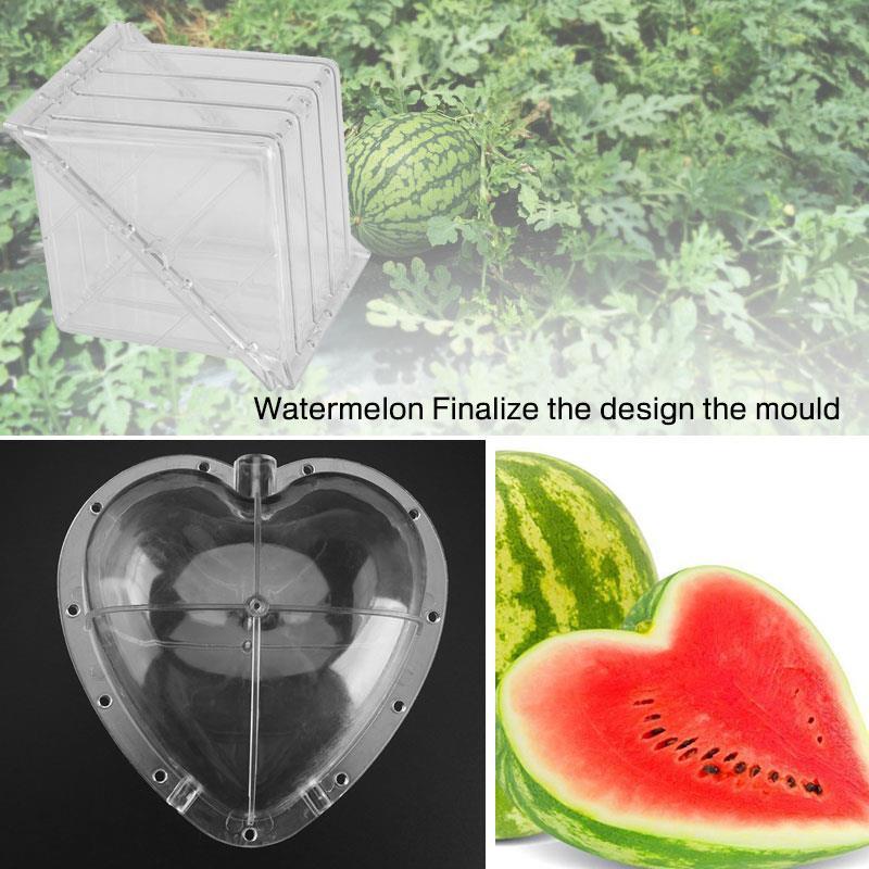 Molde transparente de sandía fuerte, molde de calabaza, molde de sandía, molde de melón cuadrado/en forma de corazón para botánica, fruta de jardín, tierra de cultivo