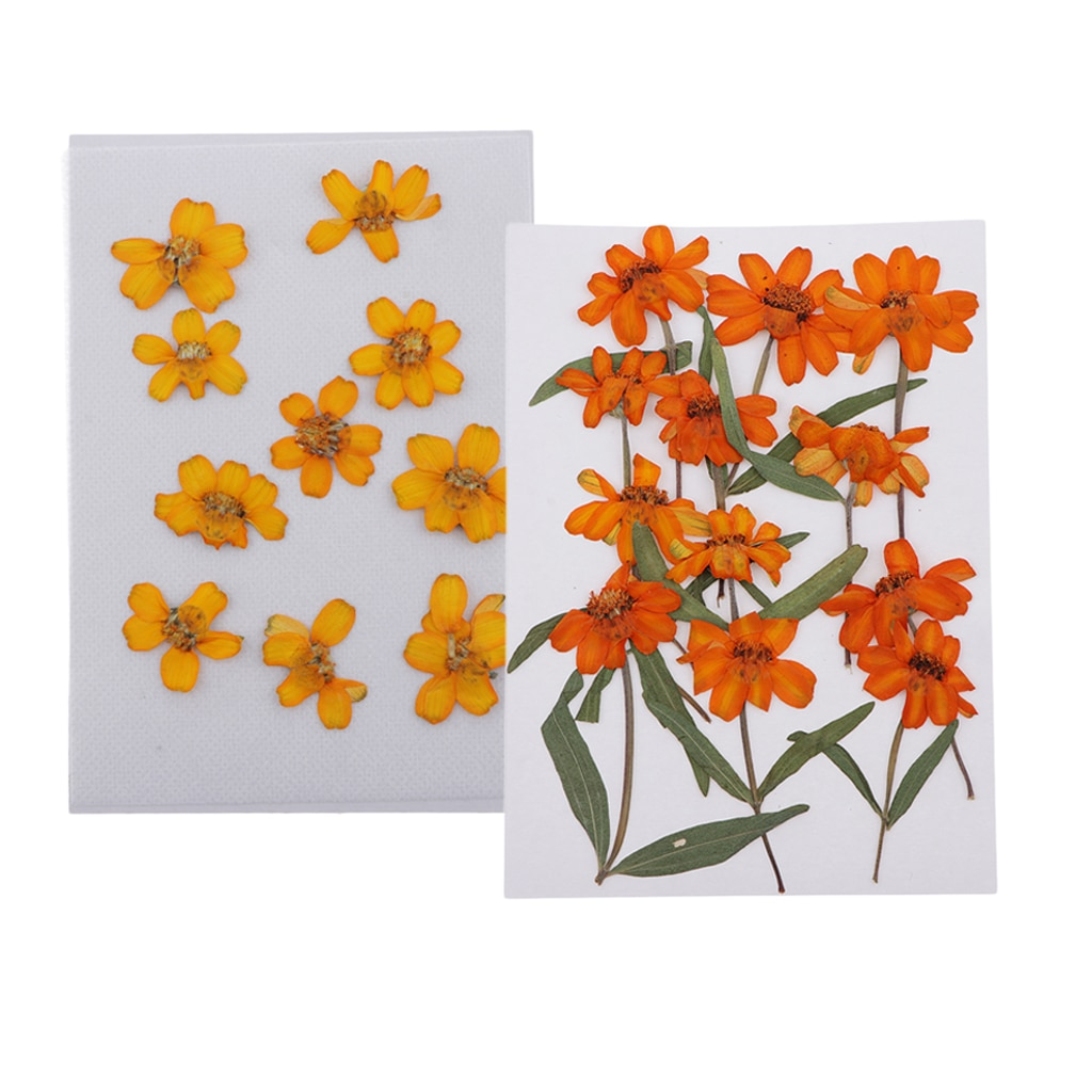 Real Dry Zinnia Flowers Natural Pressed Dried Flowers for Nails Art Craft  - buy with discount