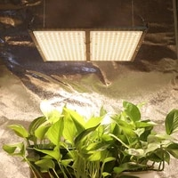 dimmable quantum led grow light board full spectrum samsung lm301b 300w plant growing lamp for indoor plant with meanwell driver