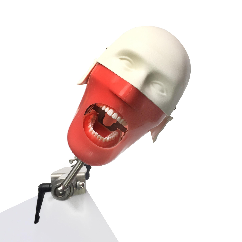 New Dental manikins and models Phantom Head  for for teaching and learning in dental classes Dental Student model