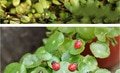 20 шт. садовые аксессуары, семиспятнистая божья коровка, аксессуары для суккулентов, DIY бонсай растения в горшках, маленькие украшения