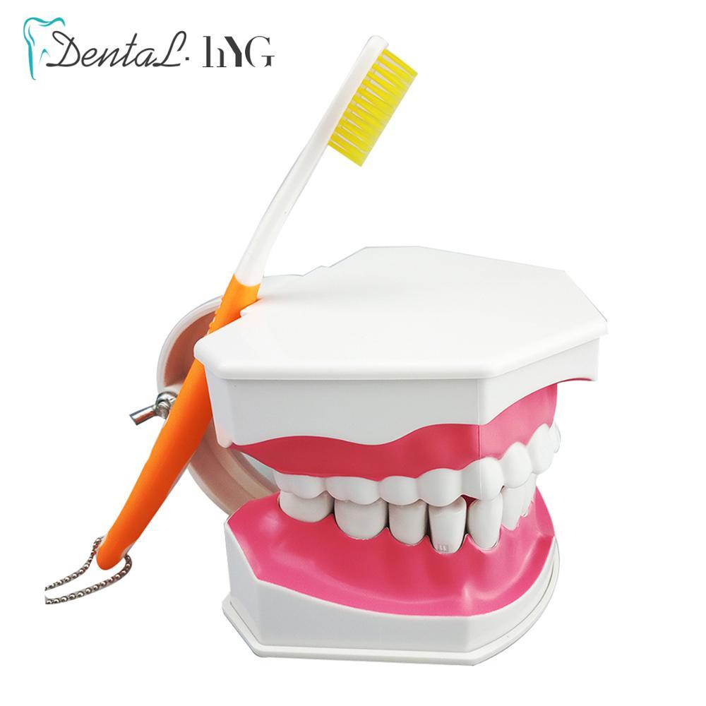 20 قطعة نموذج لشكل الأسنان الأسنان مع فرشاة الأسنان مع القابلة للإزالة الأسنان الكبار نموذج لشكل الأسنان فرشاة معيار التعليم نموذج التعليم