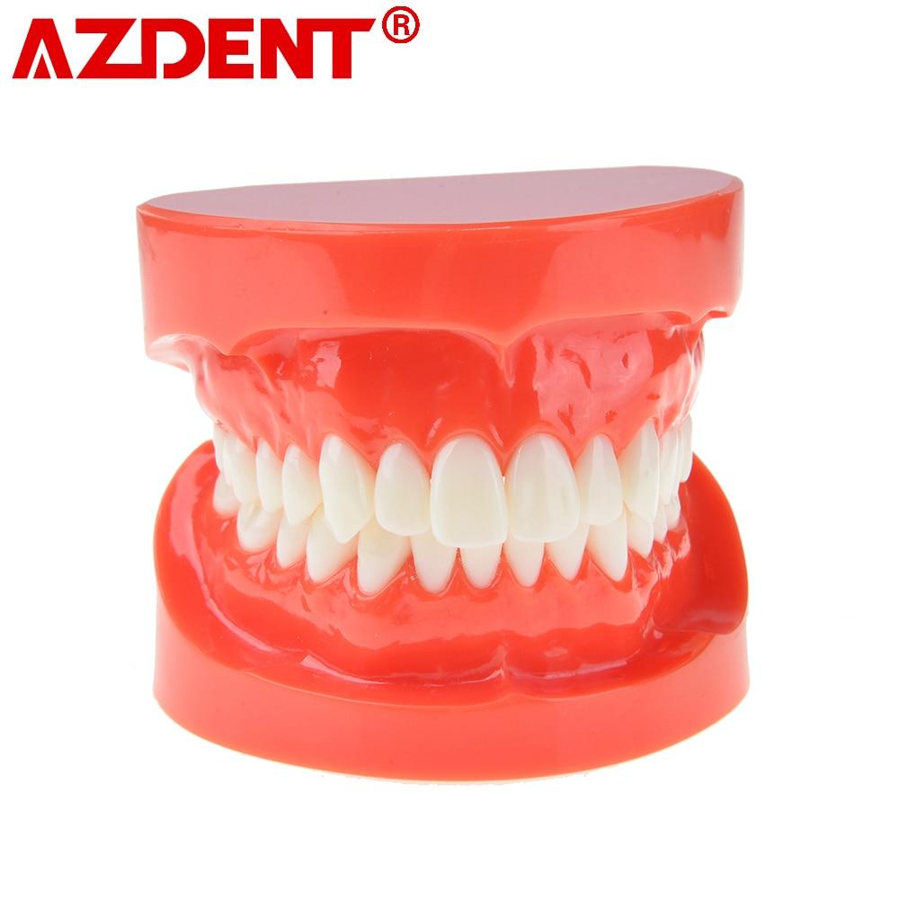 Dental Prosthesis Teeth Model Jaw Standard Typodont Demonstration Denture Teaching Model Dentist Simulator Technician Tools
