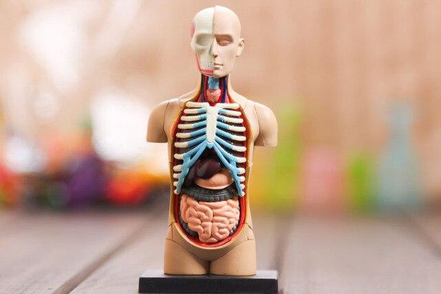 4d Human Torso Anatomy Model Skelekon Medical Teaching Aid Puzzle Assembling Toy Laboratory Education Classroom Equipment