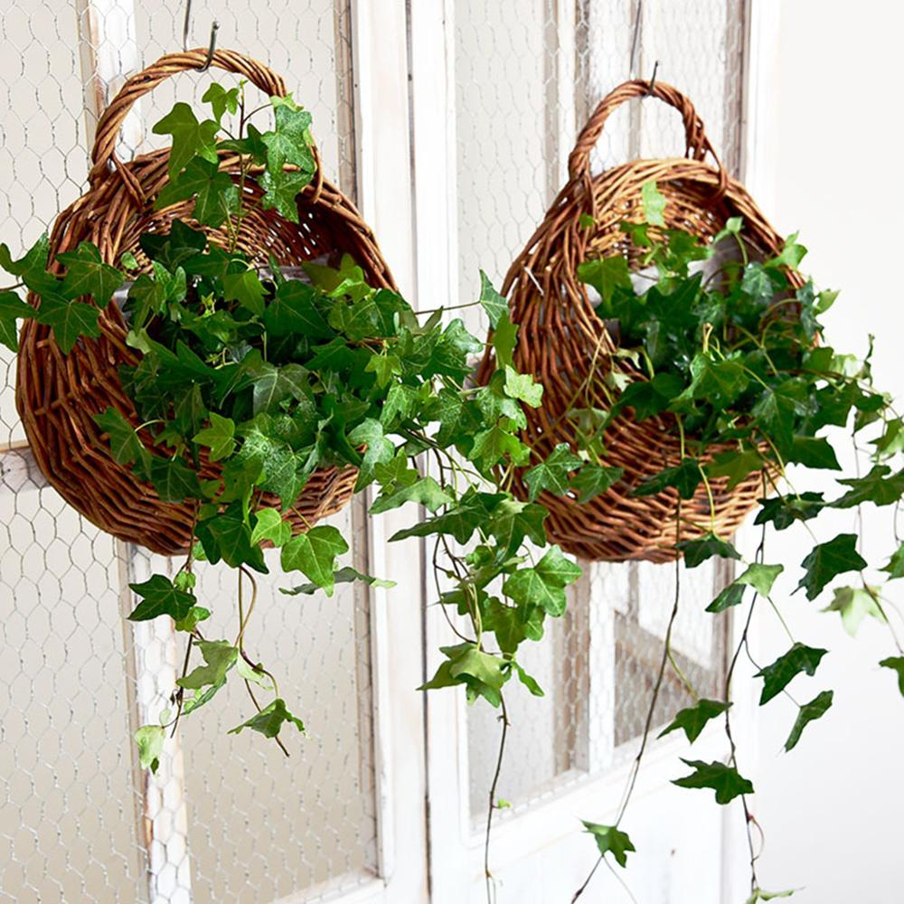 Keranjang rotan bunga rotan menggantung periuk pokok anggur penanaman - Peralatan berkebun - Foto 5