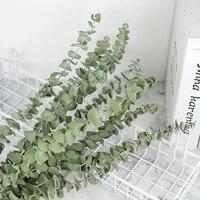 Feuilles deucalyptus naturelles  10 pieces lot  fleurs sechees  plantes naturelles  decor de mariage  maison  Branches deucalyptus  decoration de vraies plantes