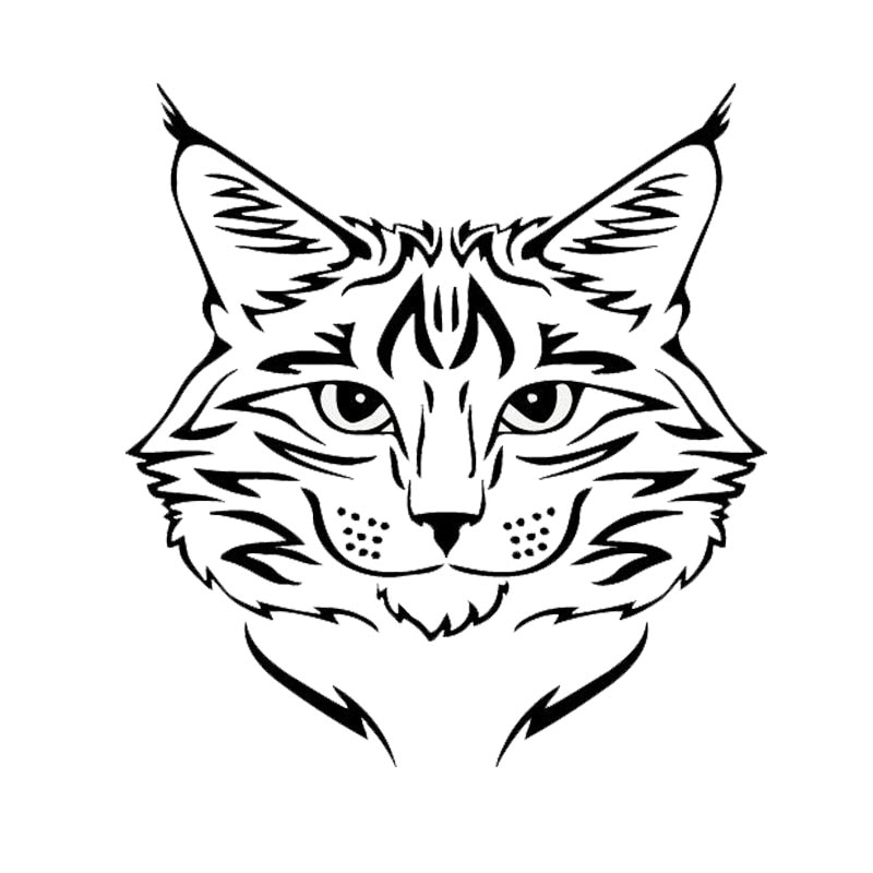 Maine Coon Cat Breed Kitten Pet Animal Car Sticker Exquisite Personality PVC Waterproof Sunscreen Decal Can Be Customized Color