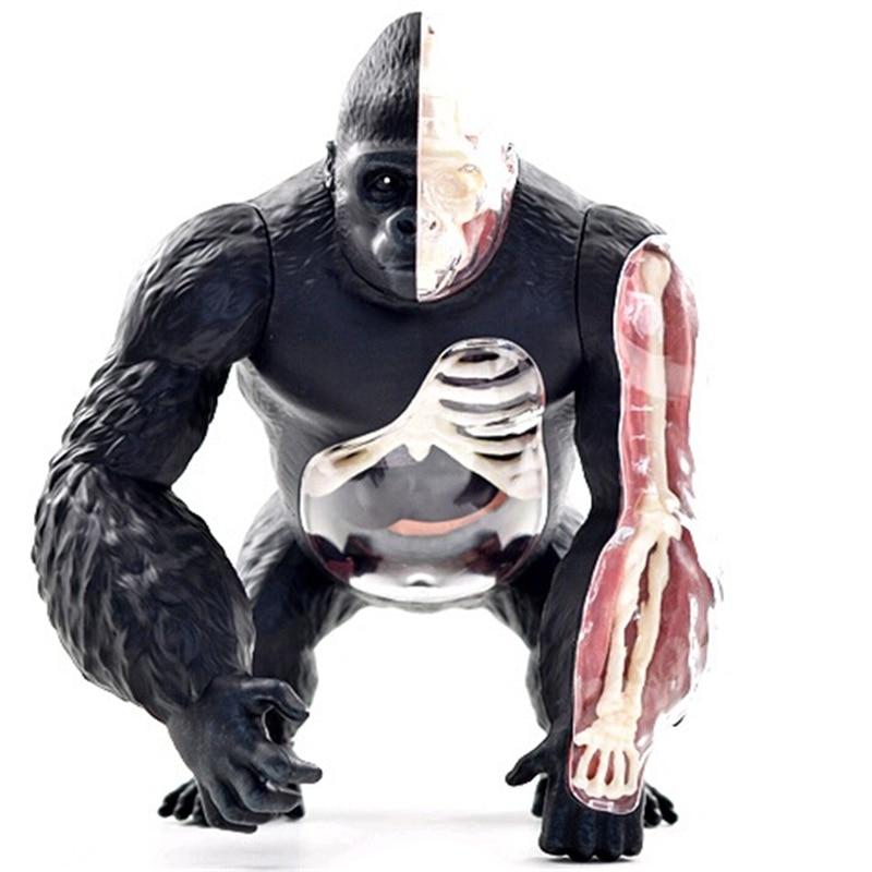 NEW! Children'S Educational Assembling Toys   Anatomical Model Of Animal Silverback Ape Organs   Medical Textbook Mold