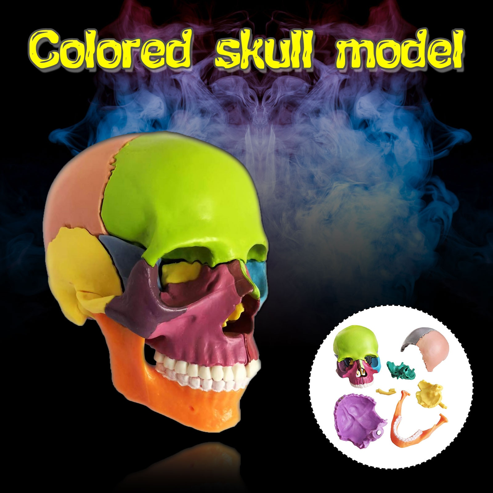 15 parts Assembled Colored Human Skull Model @ anatomical detachable model Early educational Toys of Children Drop Ship New 2020 enlarge