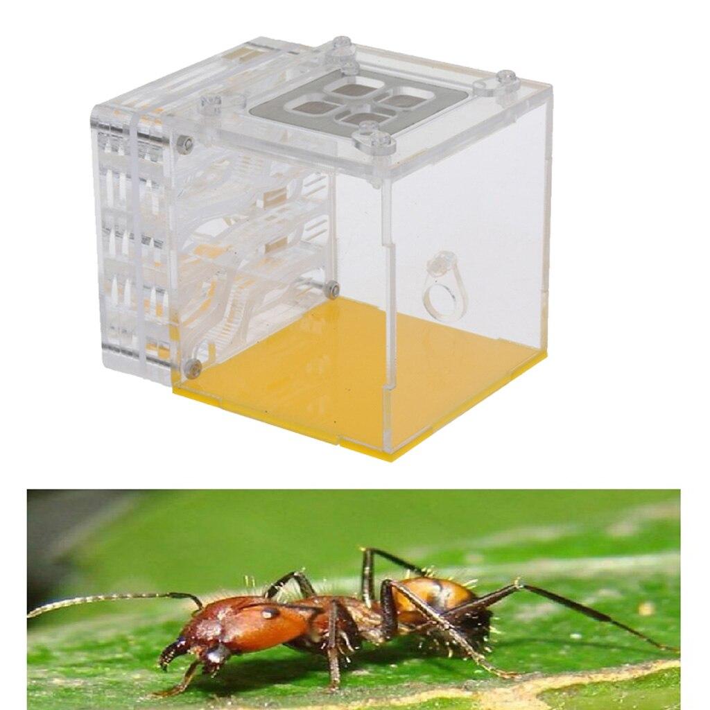 Акриловые муравьи Фермы Воды насекомое клетка питомца Муравьиное гнездо кормления игрушка клетка насекомого (квадрат)