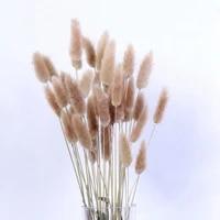 Fleurs sechees en forme de queue de lapin  15 pieces  plantes naturelles decoratives  pour decoration de maison pastorale