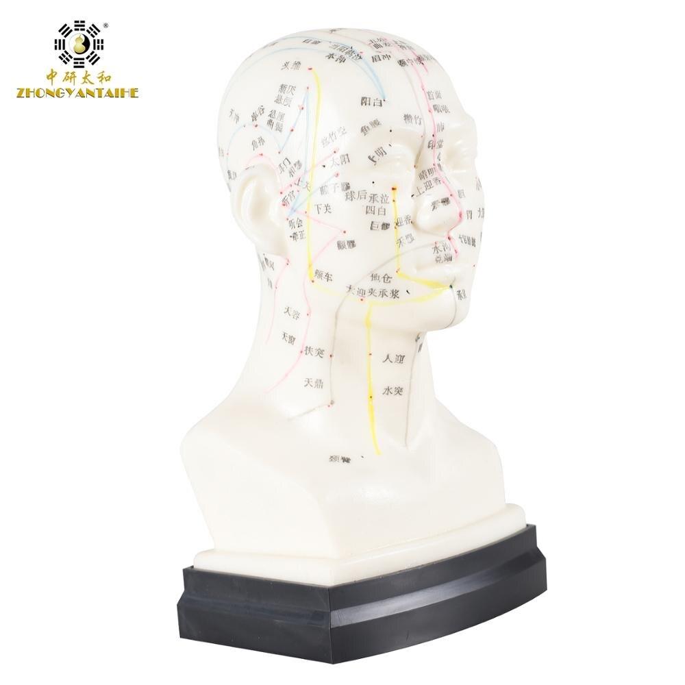 Китайская голова Акупунктура модель головы Акупунктура точка модель он голова человека Акупунктура точка модель голова Меридиан модель