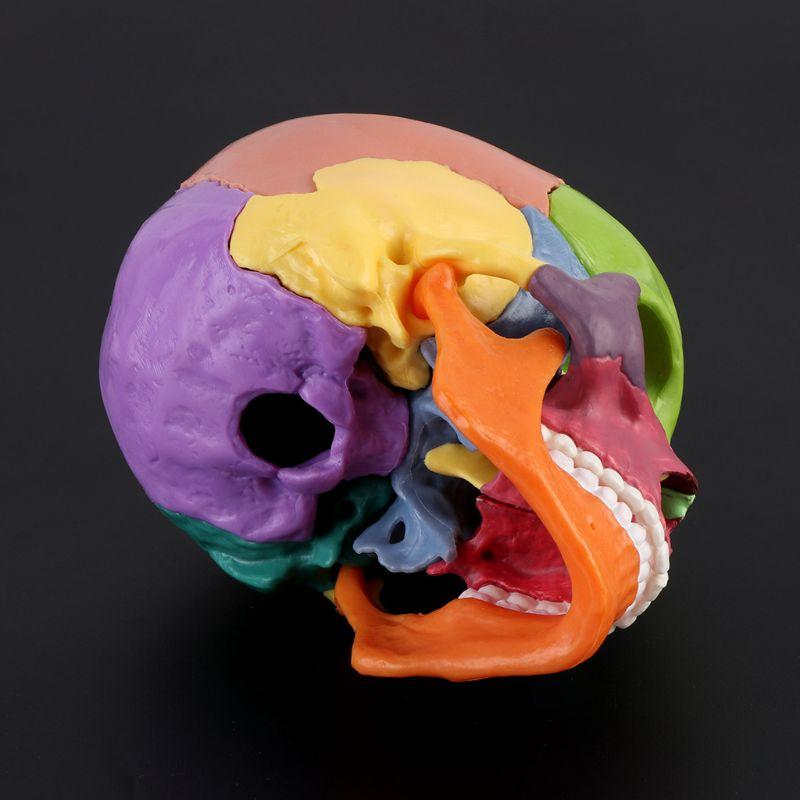 A5KA 15pcs/set 4D Disassembled Color Skull Anatomical Model Detachable Teaching Tool