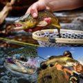 अधिकतम 10 टुकड़ा पतला मछली पकड़ने की रेखा 7.5 / 9/12 / 15 फीट (0X, 1X, 3X, 4X, 5X, 6X, 7X) फ्लाई मत्स्य पालन