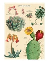 succulent cacti chart vintage style poster wall decor home decor metal tin sign