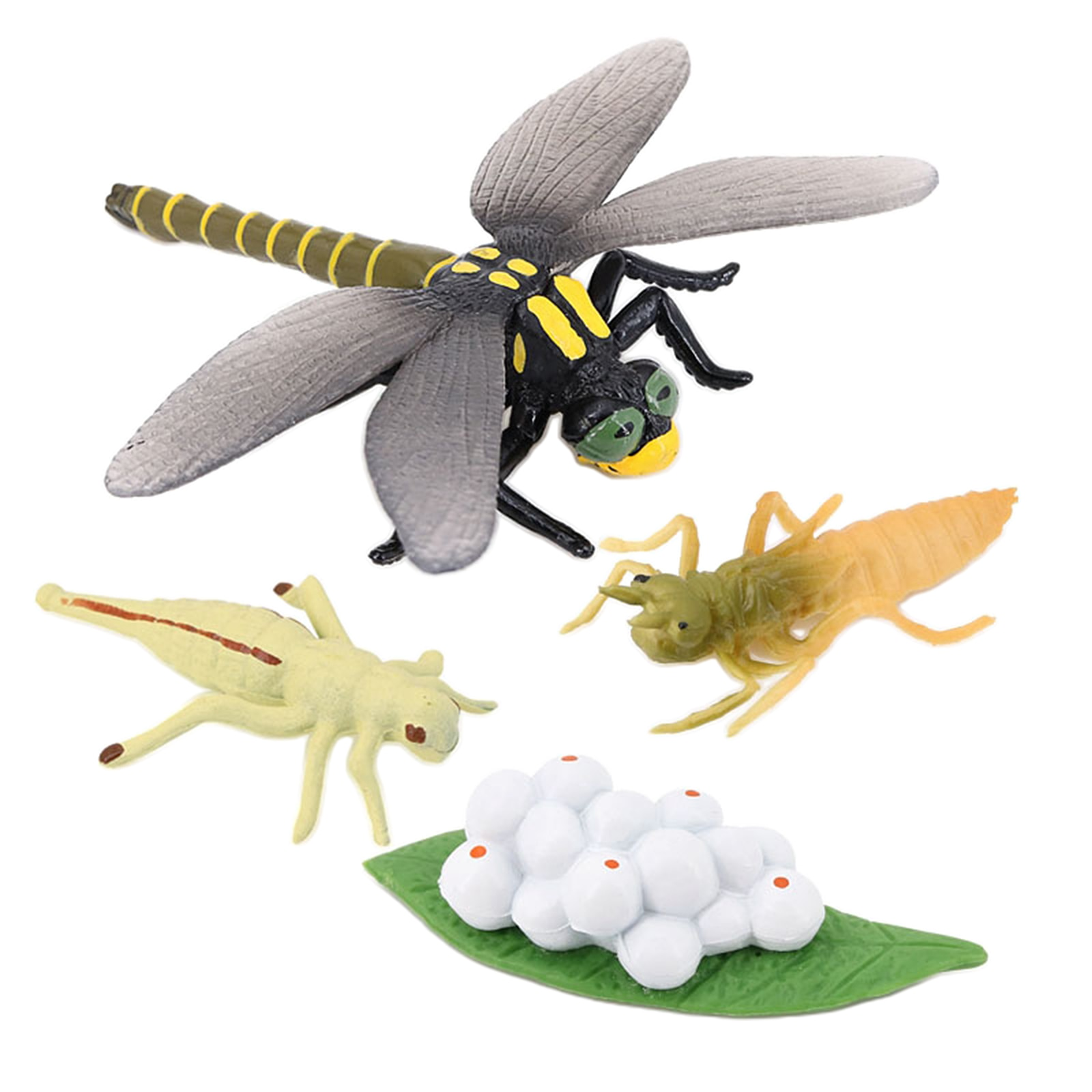 Фото - 4 Stages Life Cycle of Dragonfly Nature Insects Life Cycles Growth Model Game Prop Insect Animal Natural Toy katie marsico life cycles