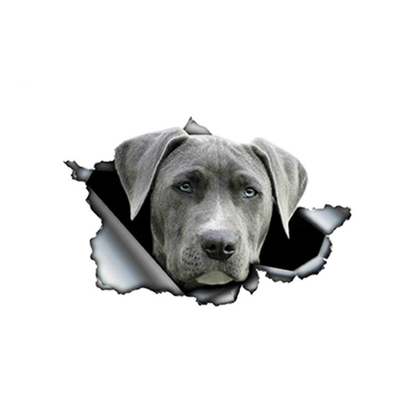 Автомобильные наклейки, Декор, мотоциклетные Переводные картинки, забавная наклейка для домашних животных, собака, декоративные аксессуар...