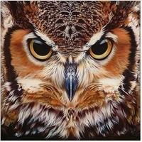 5d diy diamond painting cross ctitch owl full round drill mosaic diamond embroidery animal picture of rhinestones home decor