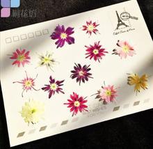 120pcss pressé séché Phlox Subulata fleur plante herbier pour bijoux Photo étui pour téléphone cadre signet faisant bricolage
