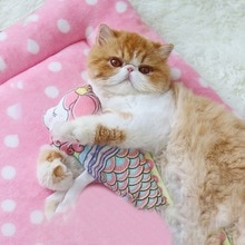 4 Shape Cat Catnip Pillow Socks Fish Toy Pet Cat Fish Toys Funny Cat Stick Pet Gifts Catnip Fish Pillow Doll# A