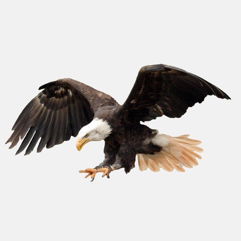 Забавные Животные Переводные картинки Летающий острый Орел ПВХ высококачественные автомобильные наклейки 17,7 см * 9,2 см