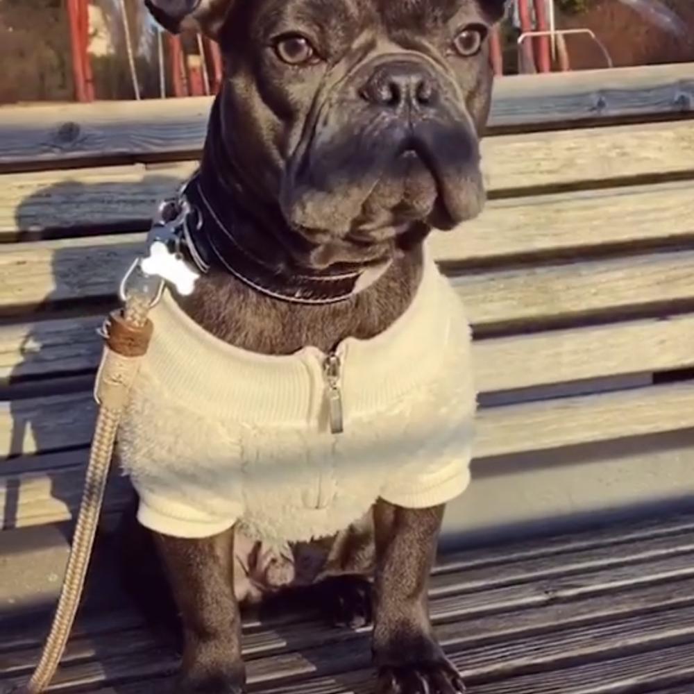 Chaqueta de Abrigo con capucha de lana caliente de invierno para perros pequeños medianos Schnauzer Bulldog francés Dropshipping GKC31