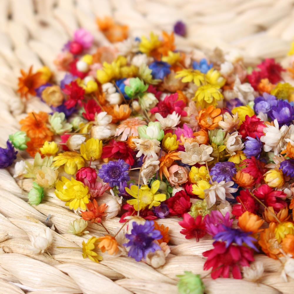 200x Real Dried Flowers For Diy Art Craft Epoxy Resin Candle Making Jewellery Simulation Decoration