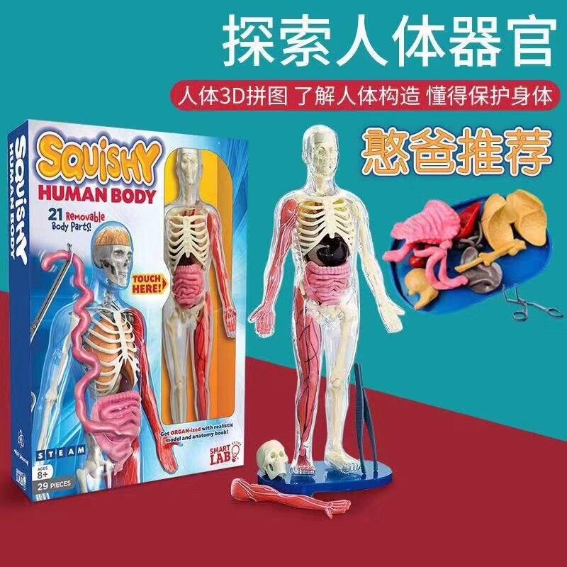 Человеческое тело, анатомическая игрушка, сделай сам, модель скелета, детский подарок, развивающая модель, стебель, мягкий материал, съемный