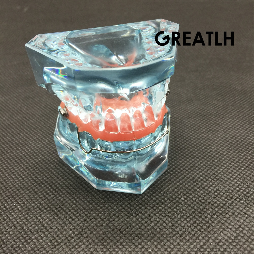 Dental Functional Orthopedic Bionator Removable Model 3006 Dental Teach Study Teeth Model