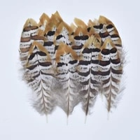 reeves venery pheasant tail feathers 5 15cm2 6 campanula feather decor feathers for crafts jewelry making carnaval assesoires