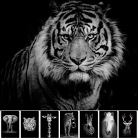 Toile dart murale avec animaux en noir et blanc  tigre et lion  affiche et tableau imprime pour decoration de salon  decor de maison