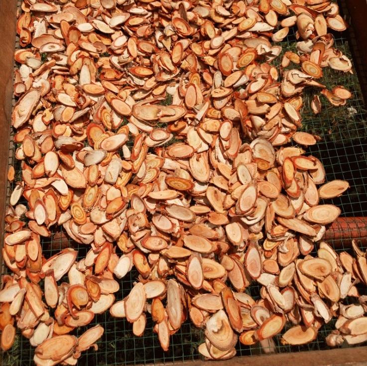 100% Natural Tongkat Ali  Eurycoma Longifolia
