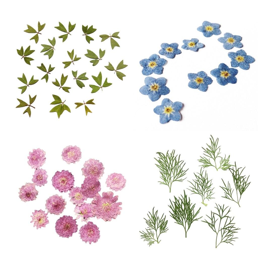 10 pçs pressionado flor seca real folhas para diy artesanato bookmark cartão que faz a decoração do cartão de casamento festa
