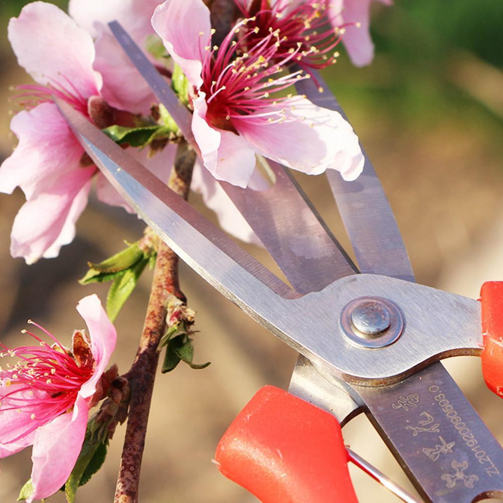 Двойной окантовкой сбор фруктов ножницы для бонсая цветок солидные СНиП секатор Цитрусовые фрукты дерево цветок ножницы садовые ножницы