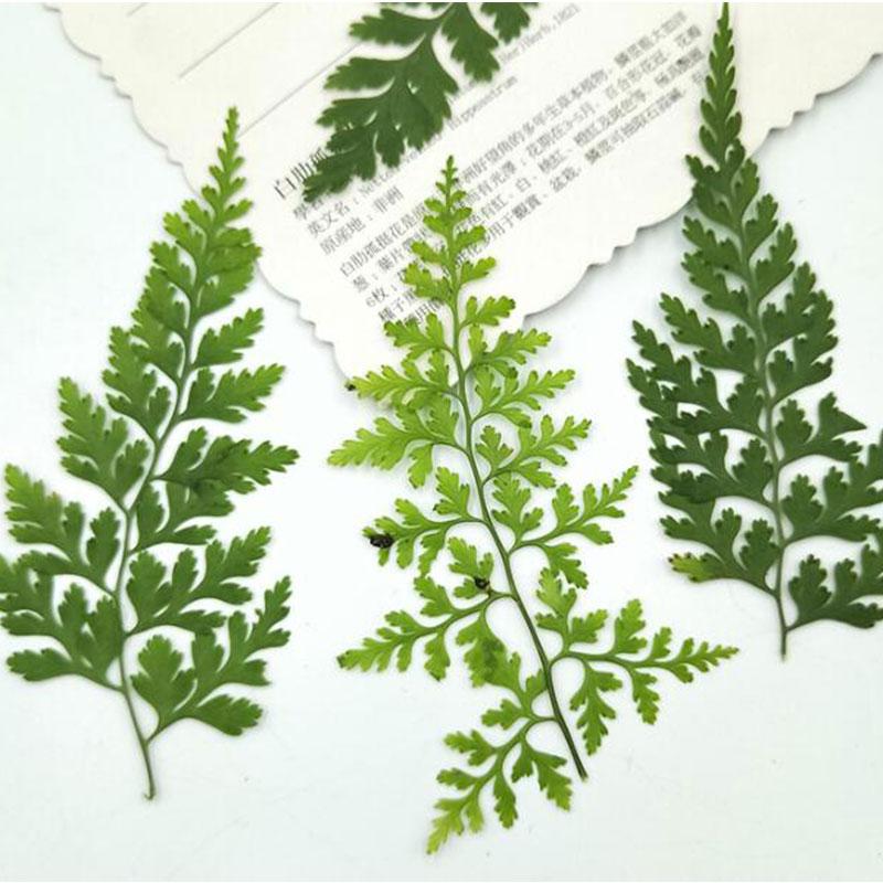 12 unids/bolsa 3D hojas florales calcomanías para arte de uñas flores secas hojas preservadas para hacer decoración de uñas de fiesta nuevo