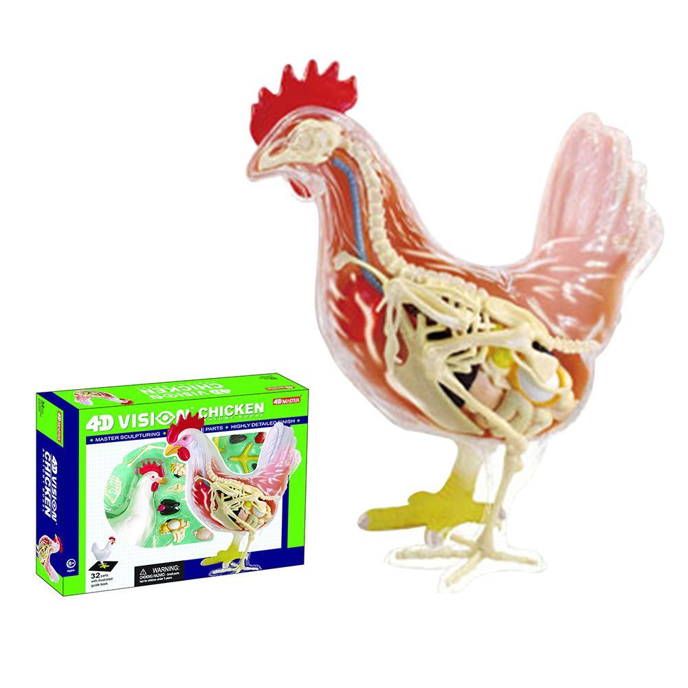 4d mestre modelo de ensino de anatomia e medicina de órgãos de frango brinquedo para crianças puzzle brinquedo educacional