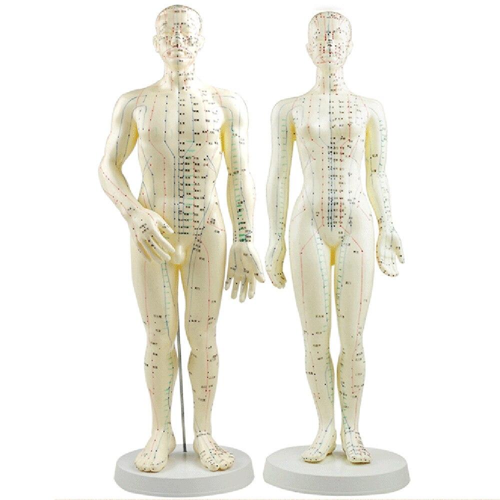 Modelo de acupuntura 50cm macho hembra con Base humana acupuntura meridianos modelo acupuntura Starter Kit