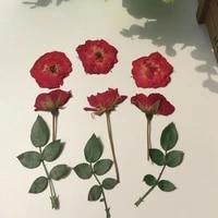 120pcs pressed dried red rosebudleaf flower plant herbarium for jewelry postcard invitation card phone case bookmark diy