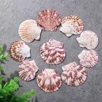 10pcslot flower scallop natural color pattern shell marine ocean fish tank landscape decoration mediterranean style home decor