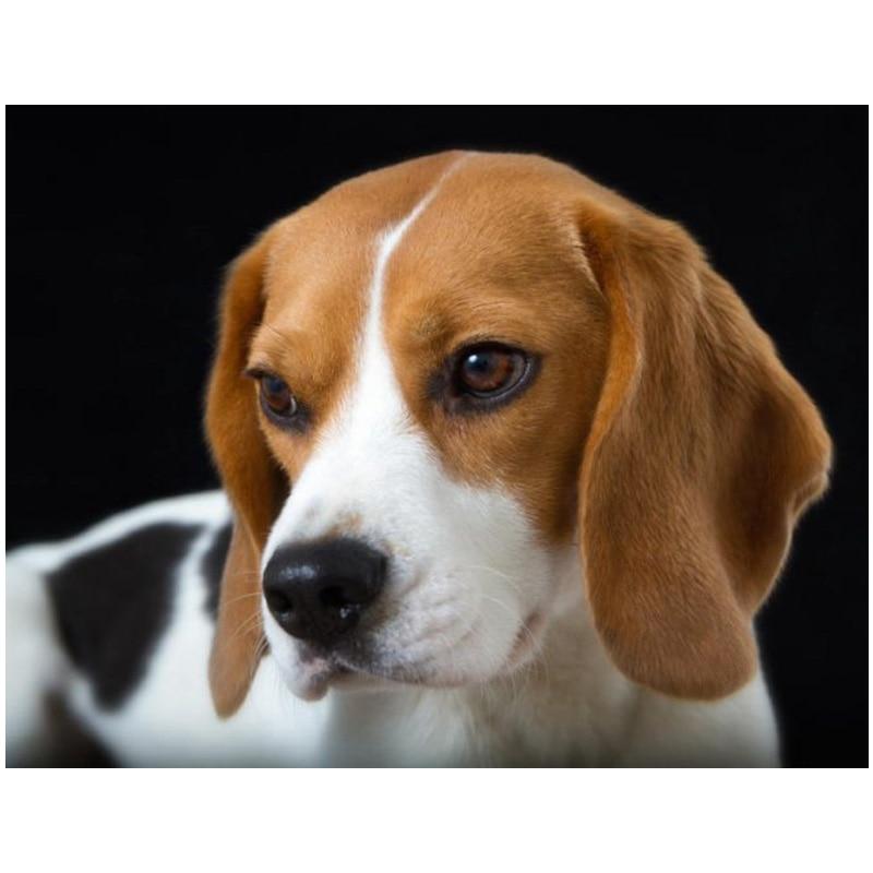 Cuadro de diamantes bordado cachorro Beagles taladro completo cuadrado cristal cuentas decoración 5d diy hecho a mano mascota imagen arte mosaico YG1727
