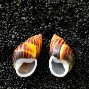 Маленькие ракушки, аквариумные мини ракушки, морские ракушки с микроландшафтом, натуральные ракушки для рукоделия