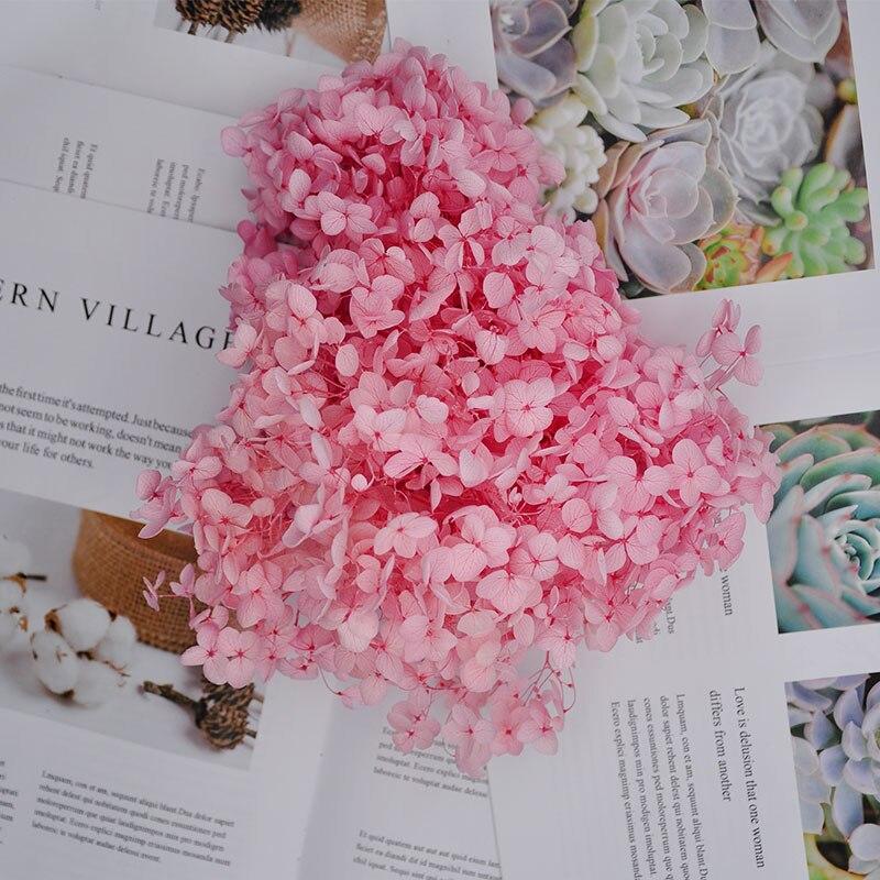 20 g/caixa de alta qualidade natural fresco preservado flores madeira seca hortênsia flor cabeça para diy vida eterna real flores material