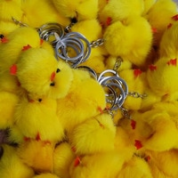 Птенчики курочки  #4