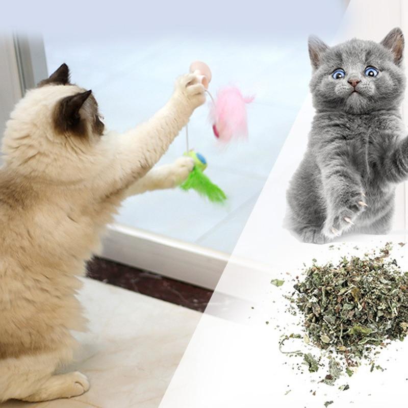 ¡Nuevo! Ventosa para ventana de plumas para mascotas juego gatos pájaros falsos arañazos juguetes gatos pluma ventosa montada en la pared