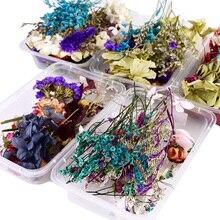 1 caixa de flores secas naturais plantas secas flores reais aromaterapia vela cola epoxy resina colar jóias diy fazer artesanato acessórios