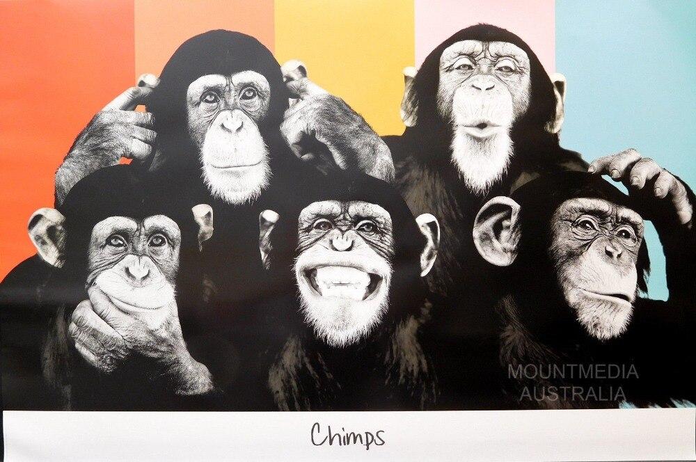 El chimpancé compilación seda cartel de pintura decorativa 24x36inch