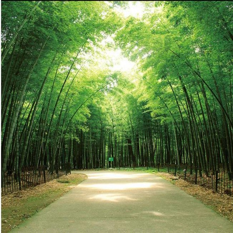 Foto tamaño personalizado de la nave pintura de pared a gran escala sofá TV Fondo pared 3D estéreo verde bambú bosque camino papel tapiz Mural
